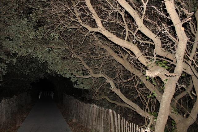 treecave